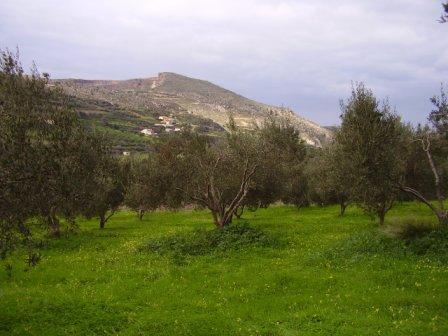 Huile d'olive au palais de Φαιστός (Phaistos)